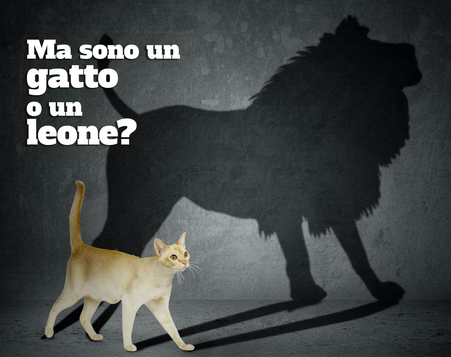 gatto o leone?